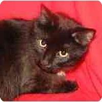 Adopt A Pet :: MOOKIE - Germantown, MD