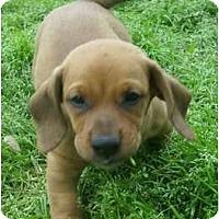 Adopt A Pet :: Duke - Glenpool, OK
