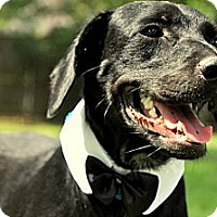 Adopt A Pet :: Stevee - Houston, TX