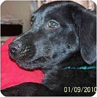 Adopt A Pet :: Lil' Man - Wakefield, RI