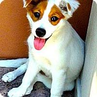 Adopt A Pet :: Emily - Miami, FL