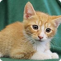 Adopt A Pet :: BuckOwens - North Highlands, CA