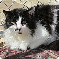 Adopt A Pet :: Macooch - Plattekill, NY