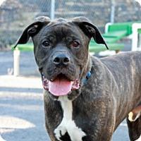 Adopt A Pet :: Alf - Port Washington, NY