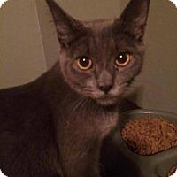 Adopt A Pet :: Booboo - Hamilton, ON