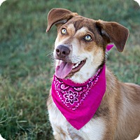 Adopt A Pet :: Lupe - Patterson, CA