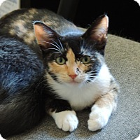 Adopt A Pet :: Zoey - San Jose, CA