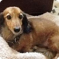Adopt A Pet :: DIGGITY - Portland, OR