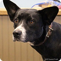 Adopt A Pet :: Ruby Tuesday - Bedford, VA
