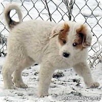 Adopt A Pet :: Melanie - new pup! - Beacon, NY