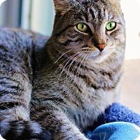 Adopt A Pet :: Grayson - Markham, ON