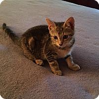 Adopt A Pet :: Ellie - Richmond, VA