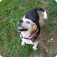 Adopt A Pet :: Lady - Freeport, ME