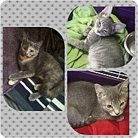 Adopt A Pet :: Rudy, Dale and Topaz - Staten Island, NY