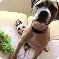 Adopt A Pet :: Eirene - Abbeville, LA