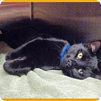 Adopt A Pet :: OLIVER - Marietta, GA