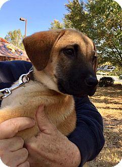 Labrador Retriever Mix Puppy for adoption in Cumming, Georgia - Cedar-Nature Pup