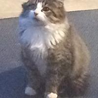 Adopt A Pet :: Kendall - Montreal, QC