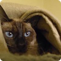 Adopt A Pet :: Cleopatra - Hamilton, ON