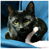 Adopt A Pet :: Cub - Forked River, NJ