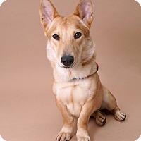 Adopt A Pet :: Topaz - Sudbury, MA
