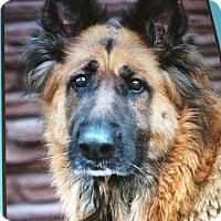 Adopt A Pet :: SHEYLA VON SPRAKLE - Los Angeles, CA