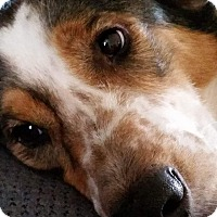 Adopt A Pet :: COURTESY POST- Kyra - Fincastle, VA