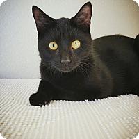 Adopt A Pet :: Preston - Fredericksburg, TX