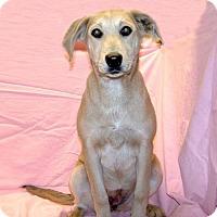Adopt A Pet :: 17-d01-024 Daisy - Fayetteville, TN