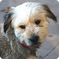 Adopt A Pet :: Holly Berry - Woonsocket, RI
