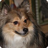 Adopt A Pet :: Bear Bear (Neutered) - Marietta, OH