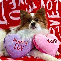 Adopt A Pet :: Sammy2 - Bryan, OH