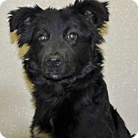 Adopt A Pet :: Pilgrim - Port Washington, NY