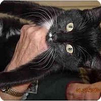 Adopt A Pet :: Hannah - Riverside, RI