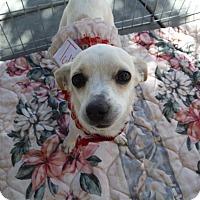 Adopt A Pet :: BLOSSOM See me at Petsmart - Atascadero, CA