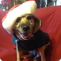Adopt A Pet :: Missie - Sweet Older Girl! - Quentin, PA