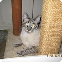 Adopt A Pet :: Lenny - La Jolla, CA