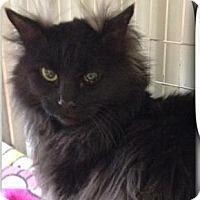 Adopt A Pet :: Dusty - Palatine, IL