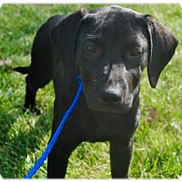 Adopt A Pet :: New Diana - Broomfield, CO