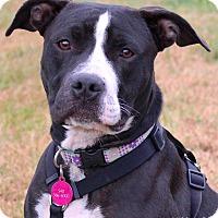 Adopt A Pet :: Daisy - Bedford, VA