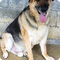 German Shepherd Dog Dog for adoption in Memphis, Tennessee - Twix