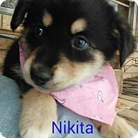 Adopt A Pet :: Nikita - Rochester, NY
