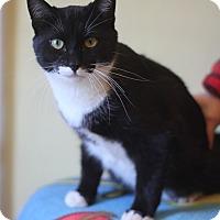 Adopt A Pet :: Oreo - Dalton, GA