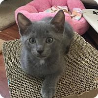 Adopt A Pet :: Heddie - Royal Palm Beach, FL