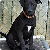 Adopt A Pet :: Meloni - Pleasant Plain, OH