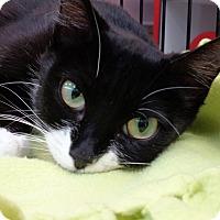 Adopt A Pet :: Shanghai - Sarasota, FL