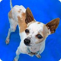 Adopt A Pet :: Tuck - Irvine, CA
