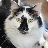 Domestic Longhair Cat for adoption in Greensboro, North Carolina - Noodles