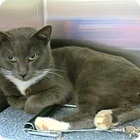 Adopt A Pet :: Ashton - Henderson, NC