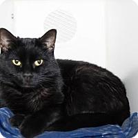 Adopt A Pet :: Narcissa Malfoy - Lowell, MA
